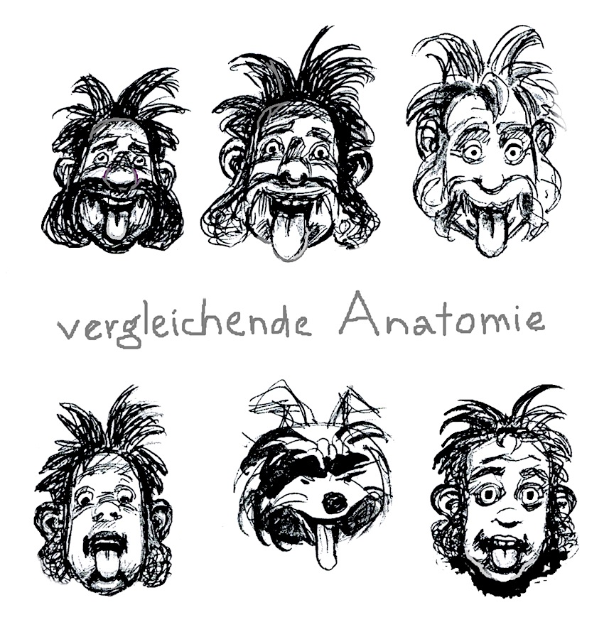 Anatomía comparada