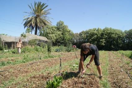 Sheila, de la Escuela de Capataces de Catarroja, aprendiendo a sacar patatas.