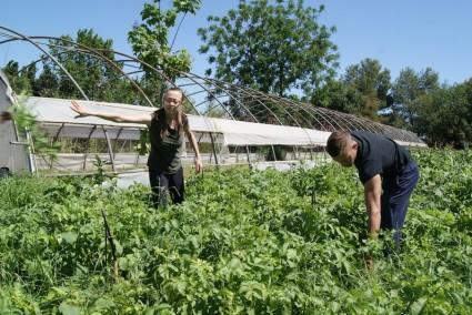 Patricia y Rafa, de Sollana, limpiando su cultivo de autoconsumo en La Peira.
