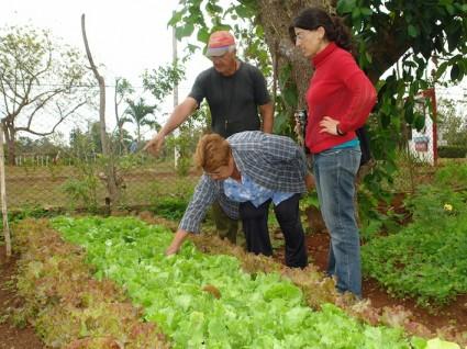 Argelio y Mirta, productores urbanos de San José, muestran sus lechugas a Isabel, Novas, estudiante de agronomía. Foto Eduardo Calvés