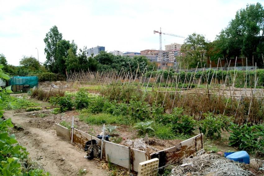 Un huerto urbano en la ciudad de Valencia