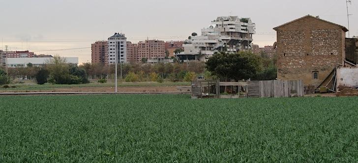 Un cultivo en l'Horta Nord de Valencia