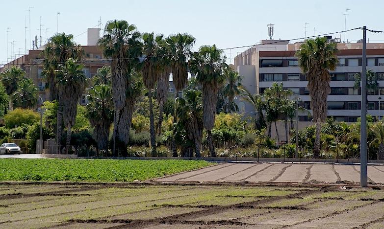 Uno de los conflictos de la agricultura valenciana, la urbanización del campo de regadío. El activismo agroecológico asegura que los cultivos de proximidad favorecen a las poblaciones y a los labradores.