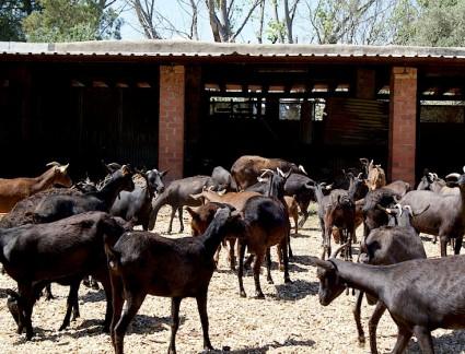 La ganadería ecológica es uno de los activos sin explotar en la Comunidad Valenciana.