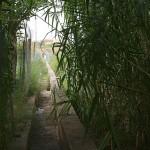 Una de las acequias que riegan los huertos okupados, pago mediante.