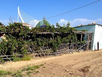 Un huerto de los aledaños de La Punta, en el litoral de la ciudad. Detrás, una estampa de la popular (en todos os sentidos) Ciudad de las Artes y las Ciencias.
