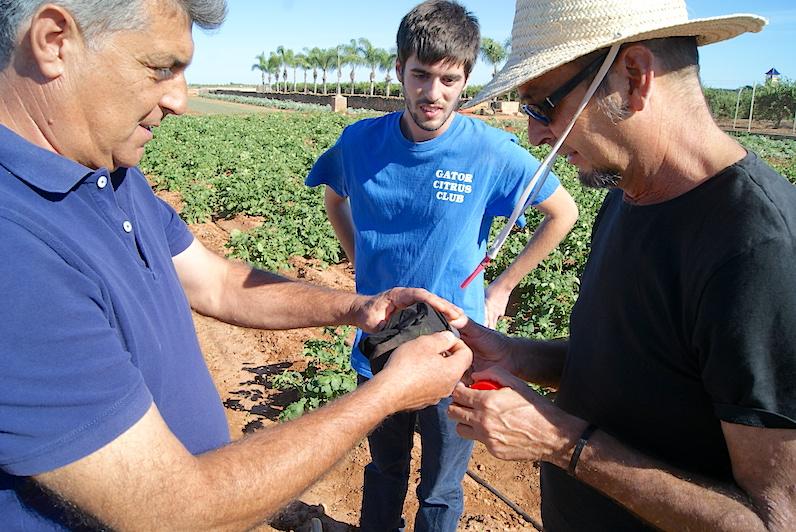 De izquierda a derecha, Julio, de Sa i Fresc, su hijo Julio, estudiante de agronomía, y Rafael Laborda
