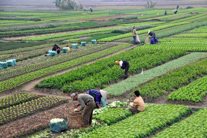 Agricultura en el Vietnam presente. Foto tomada de popular economics