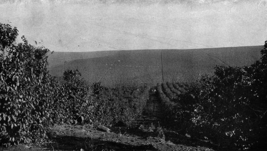Plantación de café en Brasil en la primera mitad del siglo XX