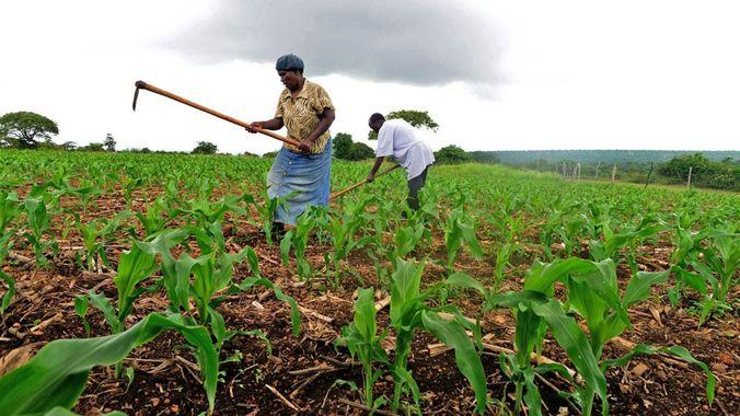 Cultivando la tierra en un antiguo bantustán. Foto tomada de mg.co.za
