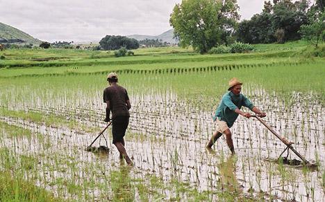 Cultivos en un lugar de África.