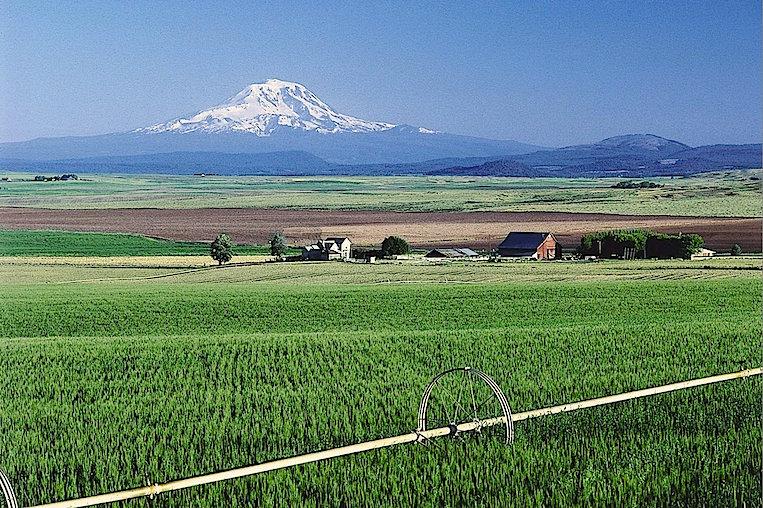El sueño agrícola yanqui. tomada de agricorner.com