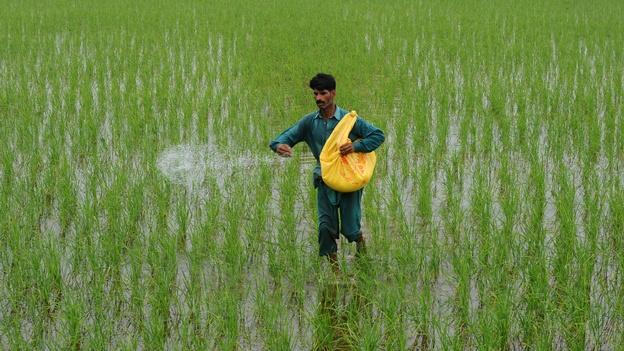Fotografía tomada de mexico.cnn.com. Corresponde a un agricultor pakistaní