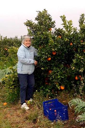 Pau recogiendo naranjas ecológicas para Saboréame