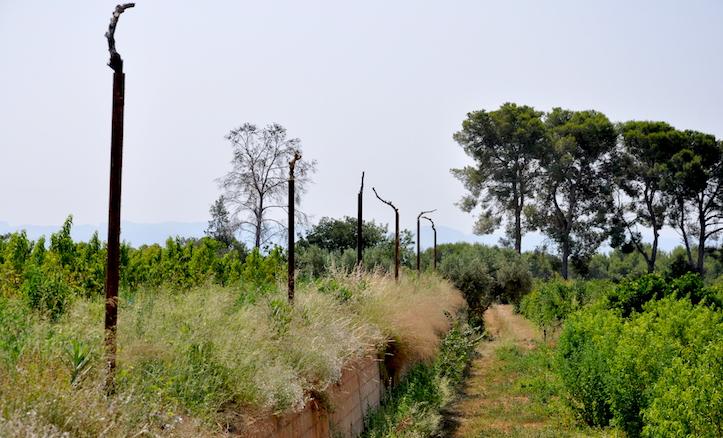 Resto de los márgenes de hormigón de la primera operación. Vicent ha plantado arbustos que en poco tiempo cubrirán el desnivel y protegeránlos cultivos. Los palos son perchas para las aves rapaces, también útiles en el ecosistema.