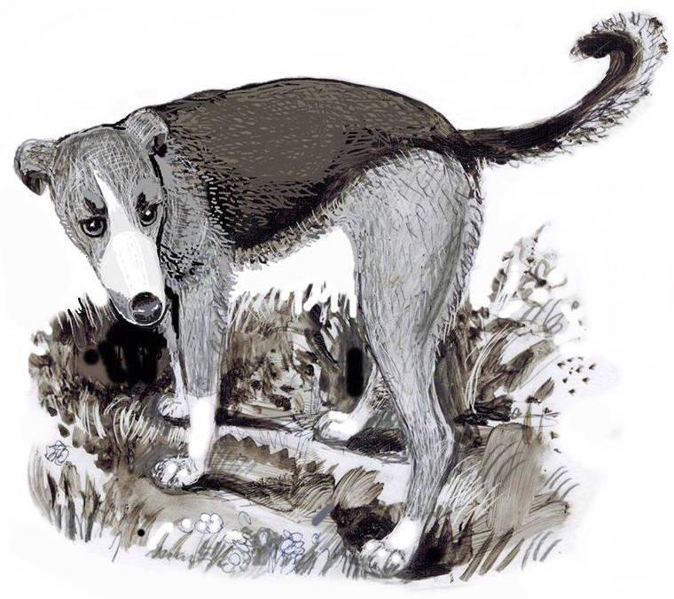 Verano-perro