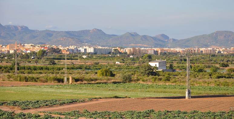 Huertos de verdura en la Horta Nord de Valencia.