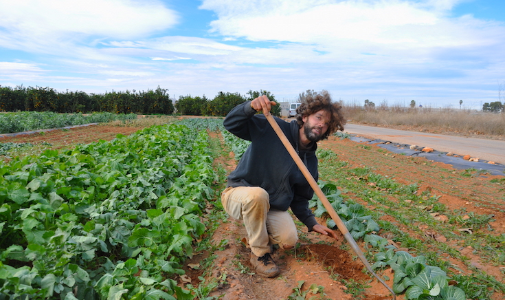En esta tierra arcillosa, las zanahorias encuentran resistencia y crecen torcidas o arrugadas.