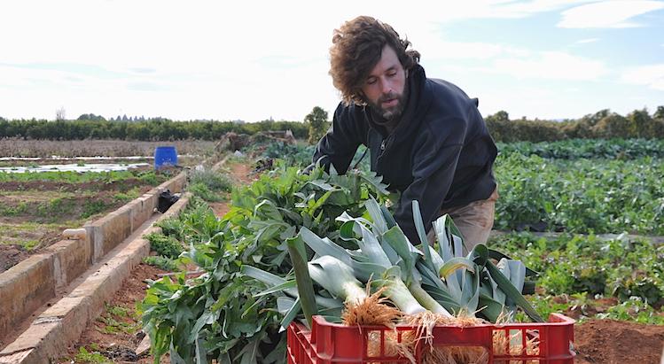 Rodolphe cultiva las cuatro hanegadas que hay a izquierda y derecha de la acequia. Con orden metódico va plantando diferentes verduras que cosecha a lo largo del año.