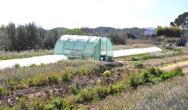 Esta parcela es la que el tío Vicente les ha alquilado. Tiene invernadero y un microtúnel donde crece algún cultivo. En unos años estará lleno de árboles frutales y contará con un gallinero.