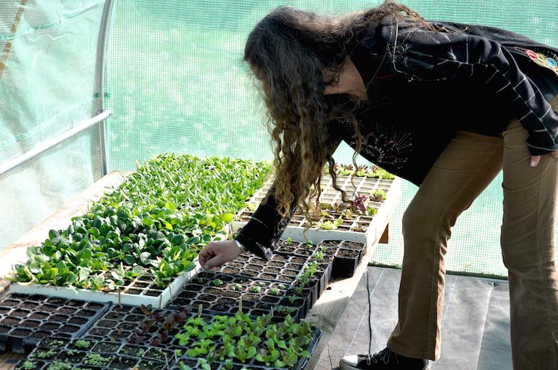 El semillero de La Huerta del Boticario, a cargo de Inma.