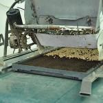 Cae una cantidad calibrada de semillas en la bandeja