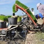 La máquina de siembra mecánica en un campo
