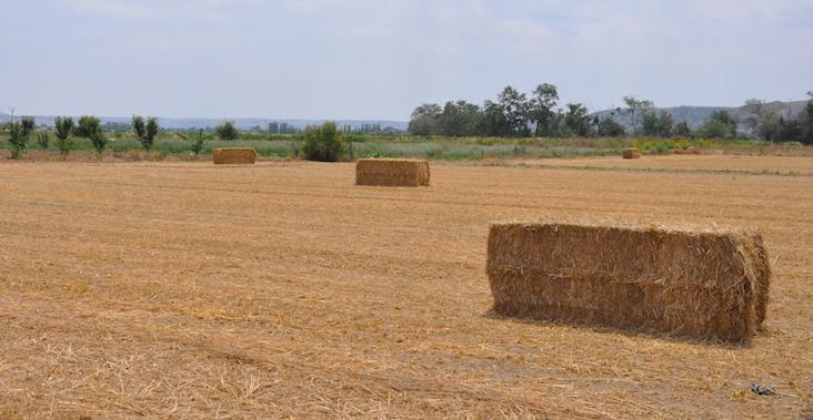 Los socios de Ecosecha también siembran cereal.