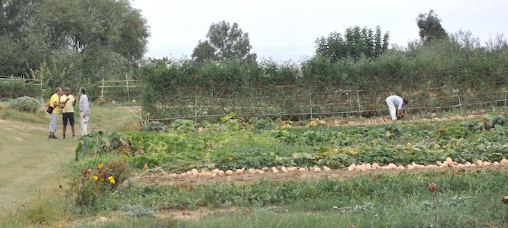 En priemr término, los cultivos de verduras, en los que trabaja, a la derecha, Damaris, una voluntaria que está aprendiendo.