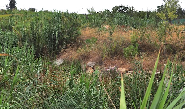 El cauce del río Pudio fue acondicionado por la Confederación Hidrográfica del Guadalquivir. Pero el mantenimiento, responsabilidad de los ayuntamientos, lo ha convertido en una selva. Bonito paisaje, pero poco aprovechable.