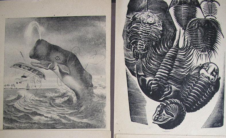 """Dos pruebas de ilustraciones del !Libro del Mar"""""""