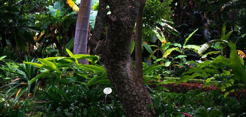 Otra imagen del Botánico de Puerto de la Cruz