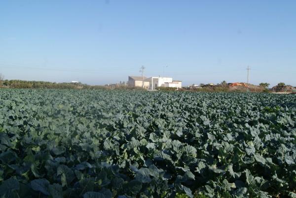 Uno de los campos de Enric en Alboraya