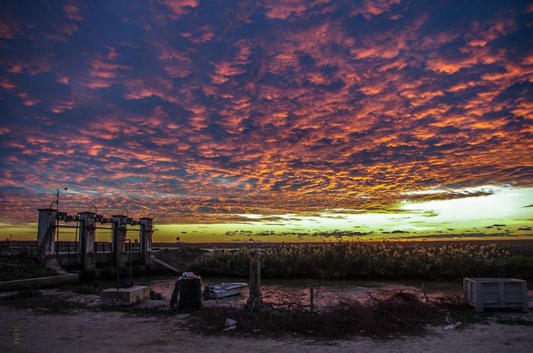 Sol de otoño en la marisma de Trebujena – Agroicultura